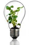 bulb-216975_150