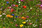 flower-meadow-260301_150